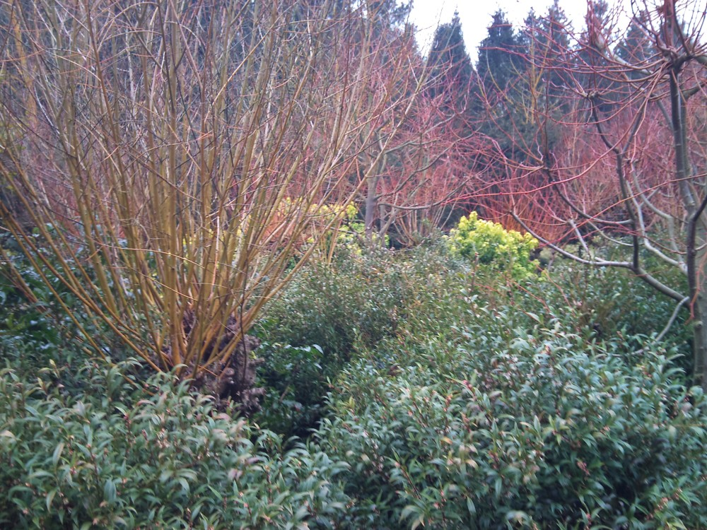 Garden visit: Anglesey Abbey (1/6)