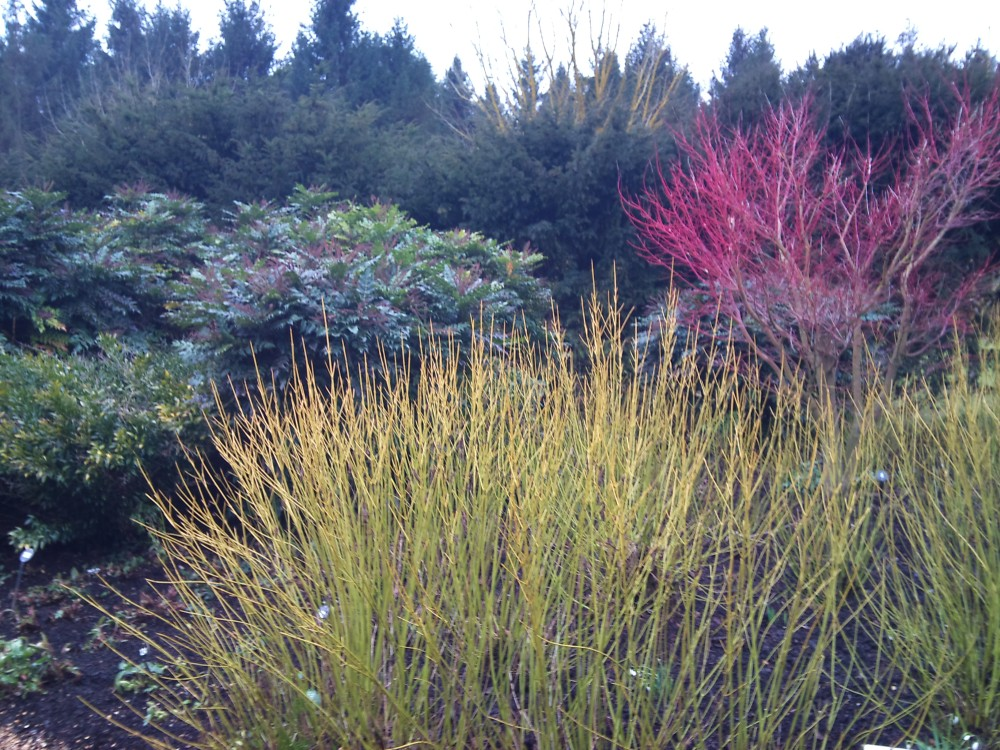 Garden visit: Anglesey Abbey (6/6)
