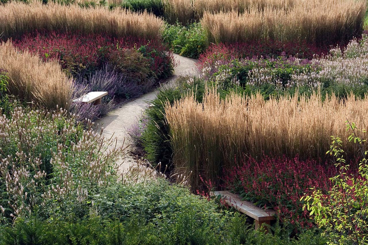 Deschampsia cespitosa goldschleier garden design eye - Garden design using grasses ...